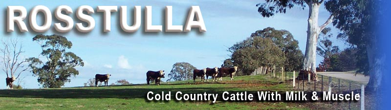 ROSSTULLA - Cold Country Cattle with Milk & Muscle